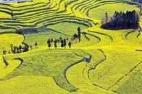 Ruong Bac Thang - Gao Sach Viet Nam - Gian Hang San Pham Tot -- 06