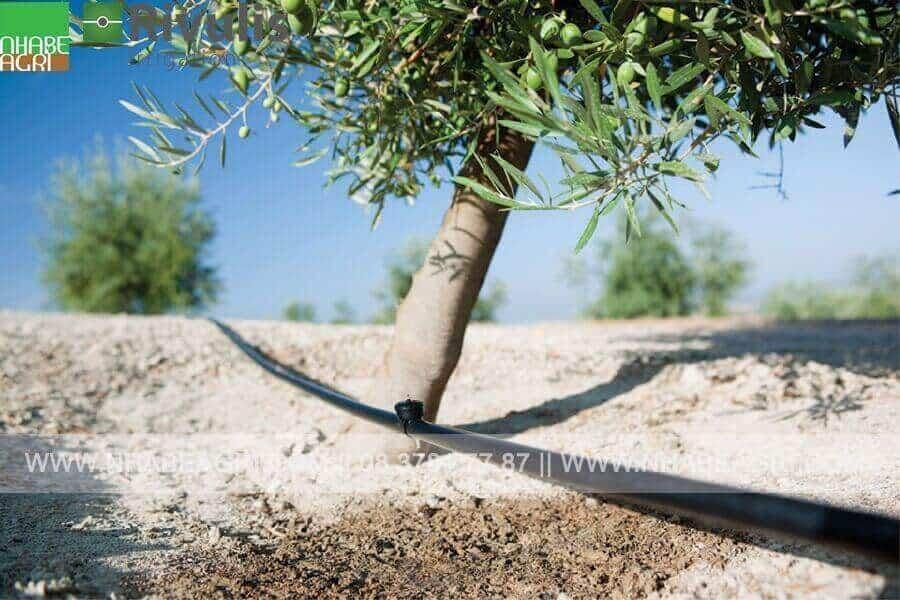 tưới nhỏ giọt cho cây ăn trái, cây công nghiệp