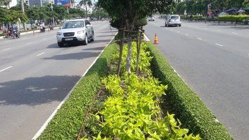 Hệ thống tưới nhỏ giọt cho lươn đường, giải phân cách, hàng rào cây xanh
