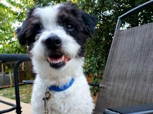 Camilo Adopted