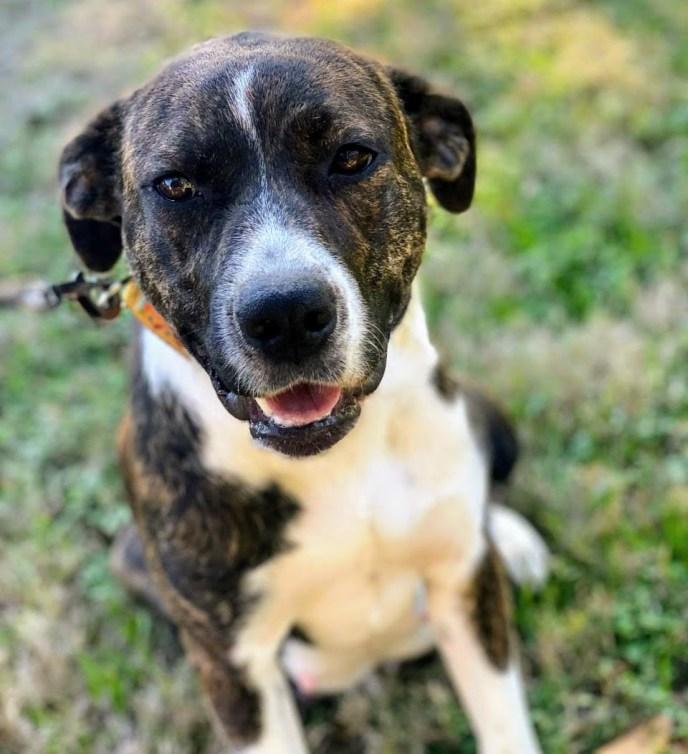 Adopt Greta - New Hope Animal Rescue