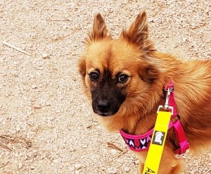 Adopt Lily - New Hope Animal Rescue, Austin, Tx
