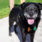 Adopt Alfie - 57 variety - New Hope Animal Rescue, Austin, Tx