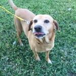 Daisy-Adoption Pending