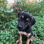 Siggy-Adopted