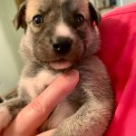 Troy-Adoption Pending