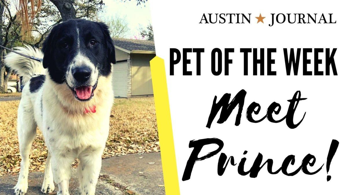 Meet Prince - Pet of the Week