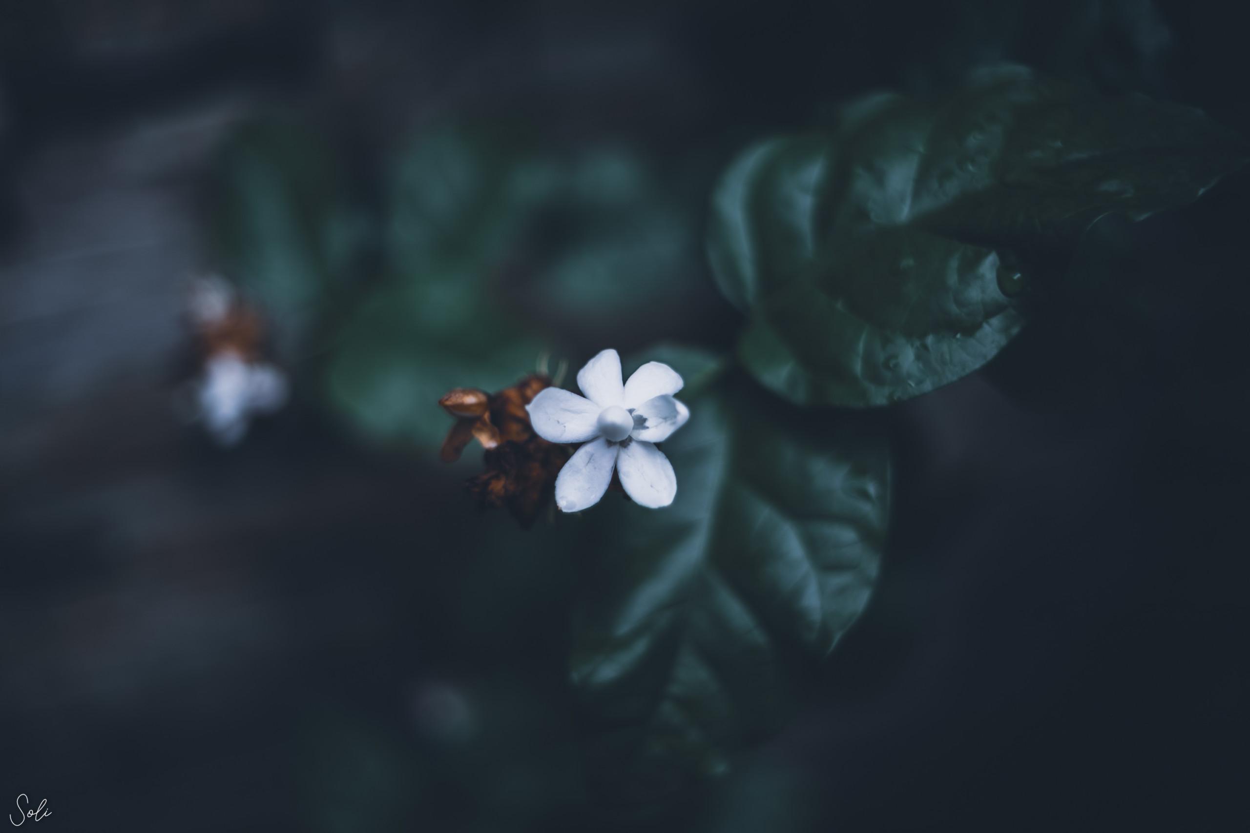 21st - Cool Light Flower