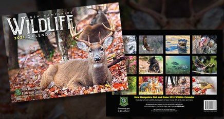 Summer Savings on the 2021 NH Wildlife Calendar Ends Today! – NH