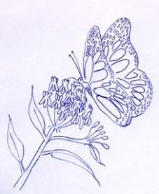 monarch-butterfly-on-milkweed
