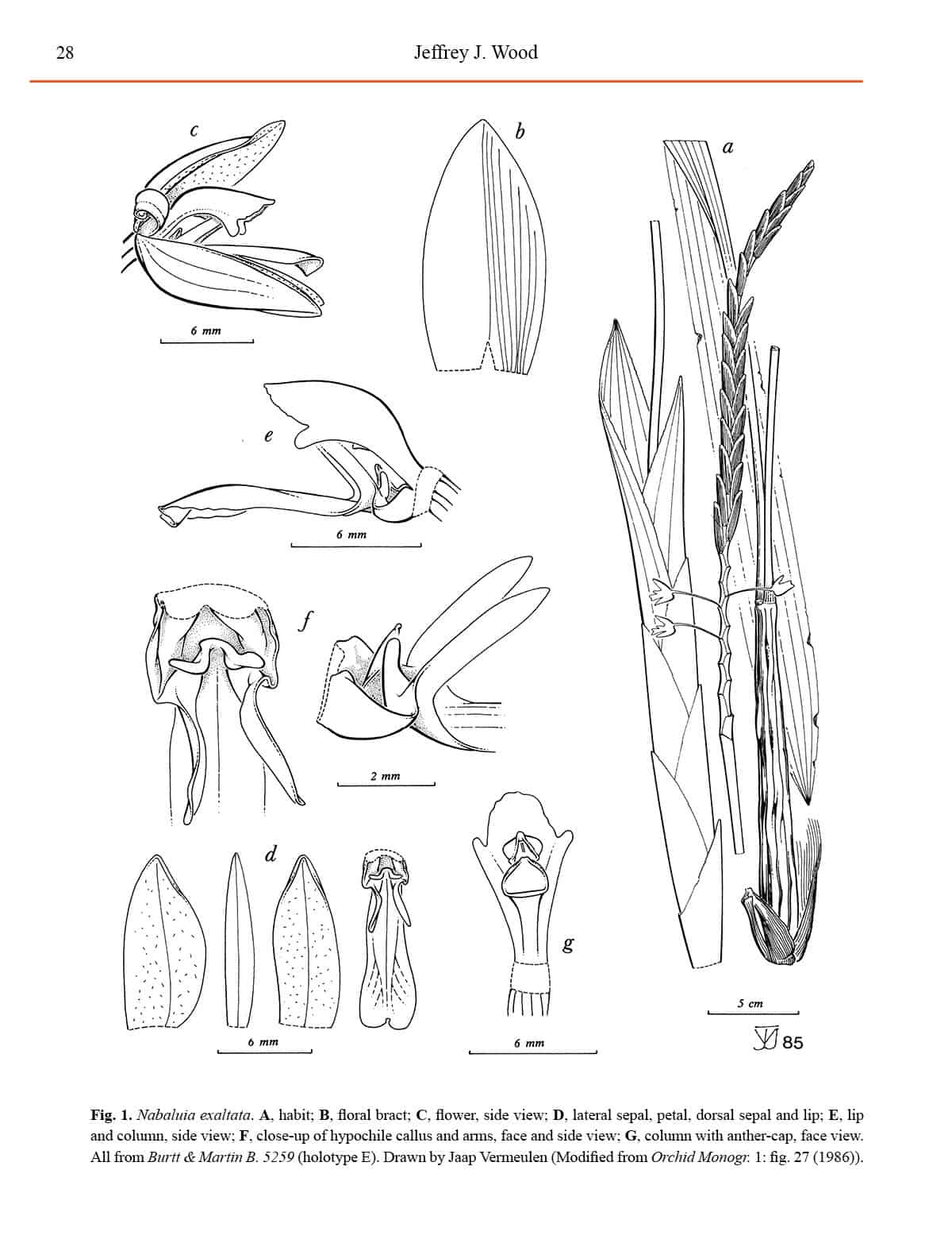 Malesian Orchid Journal Volume 20 Natural History