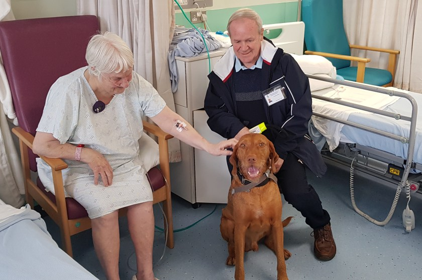 MAIN Therapet delights patients at Ninewells (3)