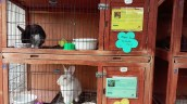pets at oc animal care (5)
