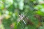 Spider 2 (1)