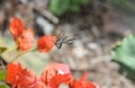 Spider 2 (4)