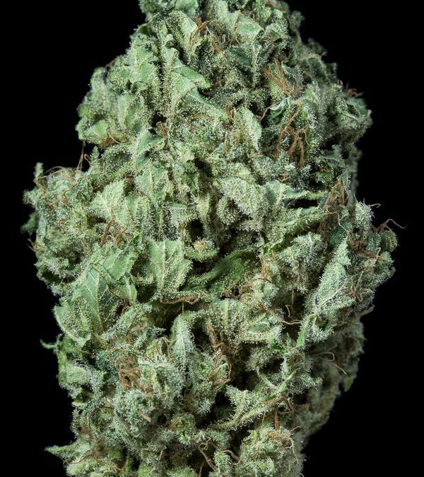 Sour Diesel Seeds – Powerful and Brilliant, for a Relaxed and Outgoing High