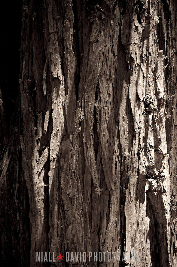 Redwood Tree Bark Closeup Sunrise Forest Trees Niall-David-Photography-9962