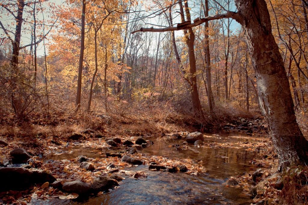Autumn Fall Hike Harriman State Park New York - Niall David Photography-2086