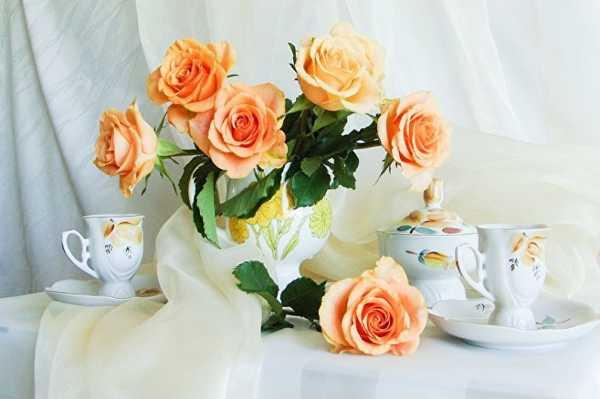 Розы комнатные декоративные. Роза комнатная - уход в ...
