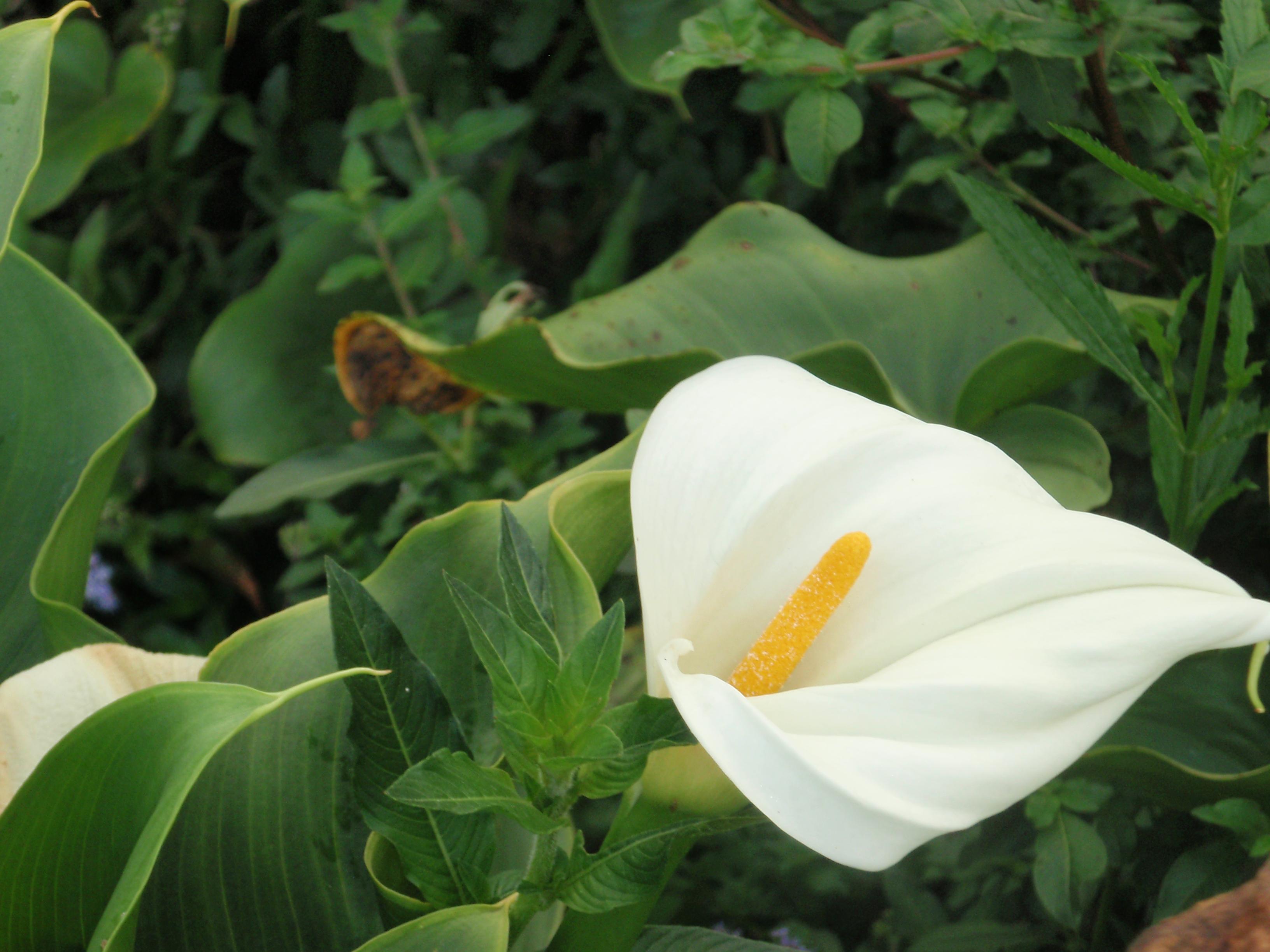 Flower (credit - Javier Baldovinos)
