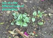 plant-3