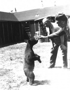 Bear cub captured by German PoWs in Riding Mountain National Park, MB, 1944. RMNP Collection