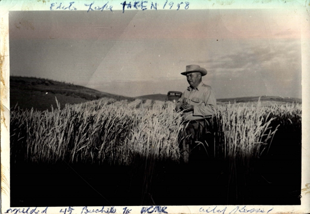 "Albert Kessel, 1958. ""Yielded 45 bushels to acre."" Hills in background. Courtesy Biggar Museum."