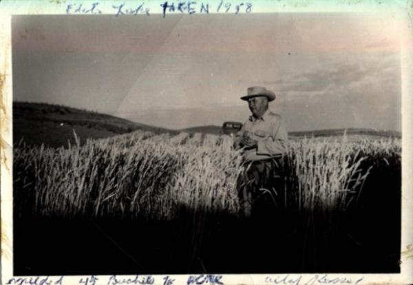 Farmer Albert Kessel of Vimy Ridge Farm with wheat crop, 1948. Courtesy Biggar M