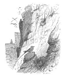 "Figure 1: ""Breeding haunts of the tropic bird – South shore,"" (Jones et al. 1859, vii)"