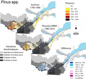 Figure 4. Distribution spatiale de la fréquence d'occurrence des pins dans les observations d'arpenteurs du Québec méridional