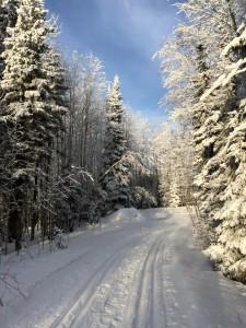 A cross-country ski trail at Elk Ridge Resort, Saskatchewan, December 2014. Photo by Merle Massie.