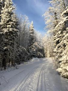 A cross-country ski trail at Elk Ridge Resort, Saskatchewan, December 2014. Photo by Merle Massie.
