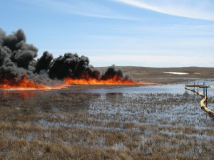 """In situ Burn on Wetland"" (Mountrail County, North Dakota) by USFWS Mountain-Prairies is licensed under CC BY 2.0."