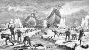 The nineteenth-century commercial seal hunt.