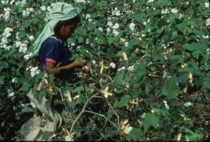 Niña recolectora en campo de algodón, Guatemala,1979-1985). Archivo del Ejército Guerrillero de los Pobres, EGP Fototeca Guatemala, CIRMA. (GT-CIRMA-FG-060-04-18)