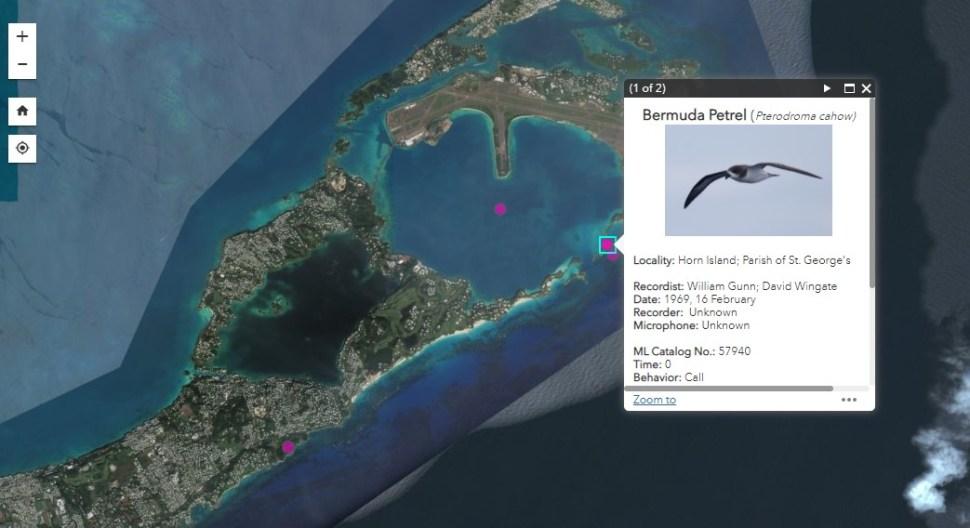 Screenshot of GIS pinpoint with audio pop-up box, image of a Bermuda petrel (bird).