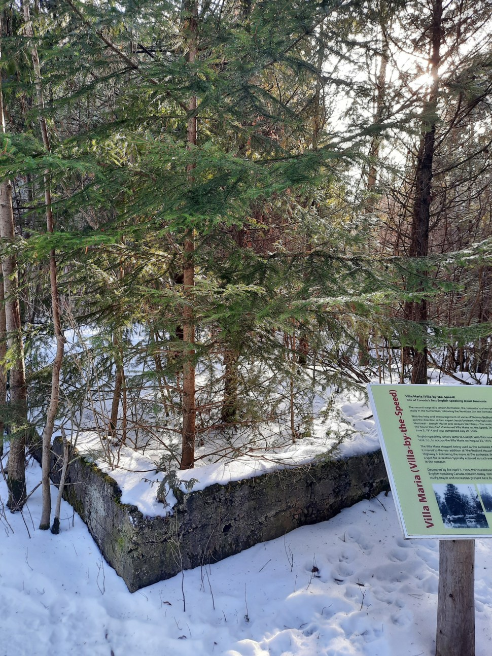 Trees growing from a layer of concrete, with snow on the ground. Part of an information board telling the history of the Villa-by-the-Speed is shown in the right foreground