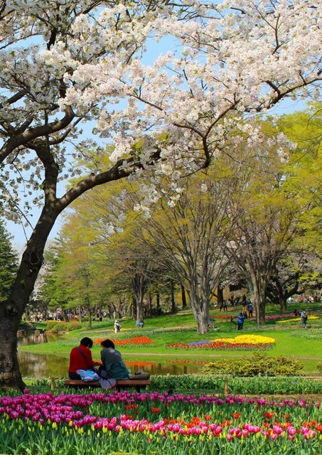 A couple sits beneath a flowering tree surrounded by flowers in a park.