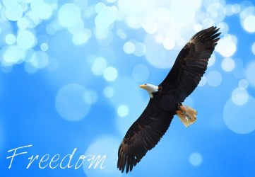 Eagle soaring across the cloud filled sky