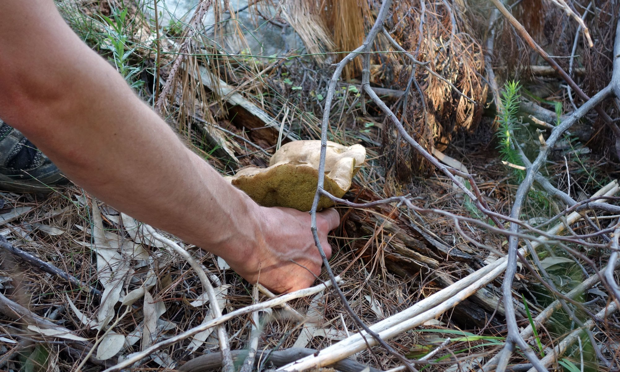 Mushroom harvesting in Suurbraak