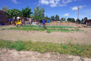 Food garden in the low-cost, RDP-type (Reconstruction and Development) sector of Suurbraak