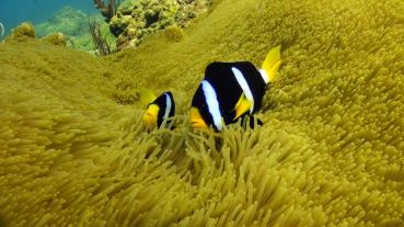 Thailand Nicholas Conley scuba