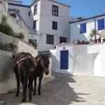 Donkey on the island of Hydra, Greece