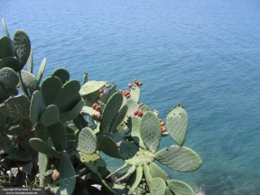 Prickly pears over Nafplio, Greece