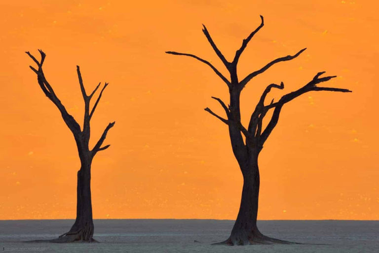Dead Vlei trees in Namibia