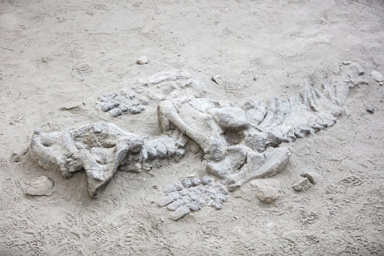 Dinosaurio en Ischigualasto