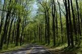 Day 2 - Blue Ridge Highway, VA