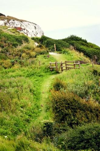 Newman_pasture