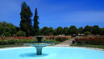 San_Jose_Municipal_Rose_Garden1