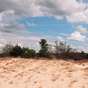 Dünenlandschaft #Nord-Brabant #Niederlande